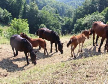 Napočil čas tudi za ukrep DŽ za konje
