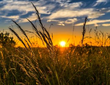 Kmetijstvo in DOPOLNJENE omejitve zaradi epidemije